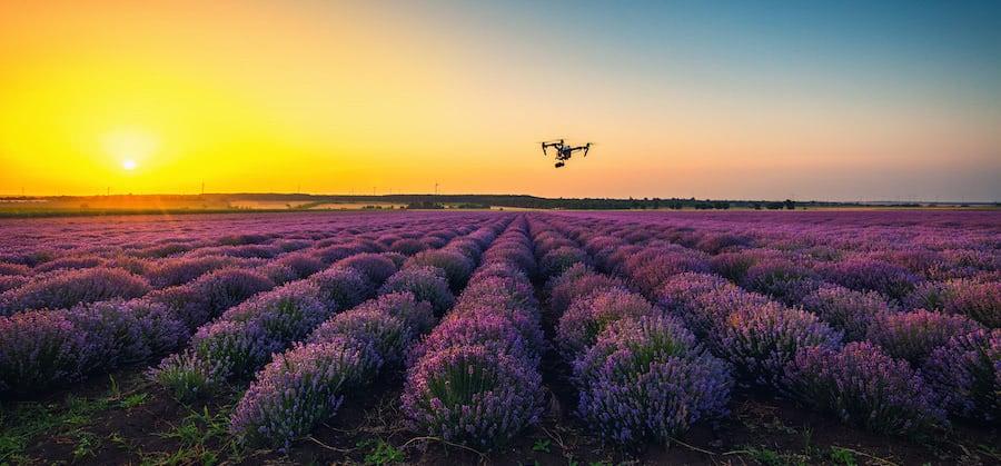 dron dji inspire en vuelo sobre campo de lavanda al atardecer