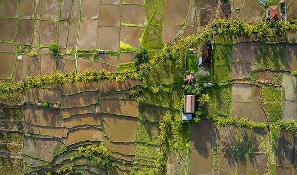 vista desde arriba de un campo de agricultura y una casa